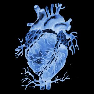 Akut fokuseret ultralydsundersøgelse af hjertet versus ekkokardiografi