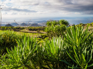 Anæstesilæge på Tenerife